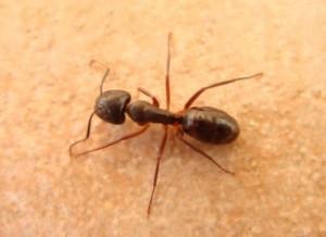 ant2[1]