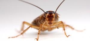 ゴキブリのお勉強 その2
