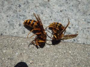 スズメバチが活発になる時期。