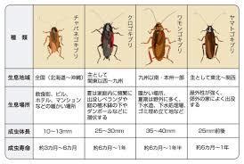ゴキブリについて