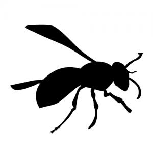 蜂の色認識 白色は・・・