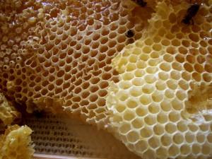 ミツバチの人家住み着き