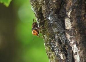 蜂の色認識