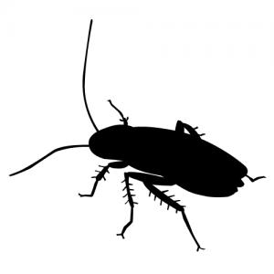 ゴキブリに好かれやすい家