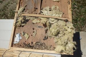 天井のシミはチョウセンイタチの糞尿が原因!?