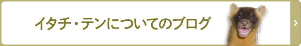 イタチ・テンについてのブログ