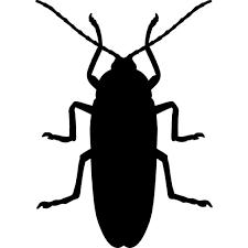 ゴキブリに媒介される疾病