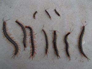 害虫・害獣活動期