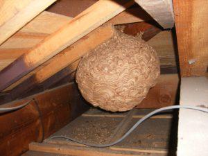 気付かぬうちに・・・・スズメバチの営巣