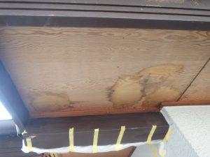 コウモリのフン。家屋に被害。