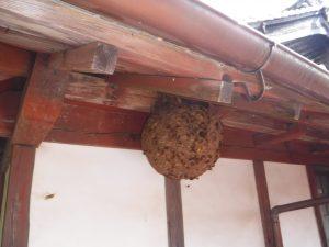 危険なハチと幸せ呼ぶハチ