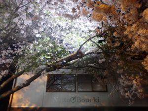 大分本社で夜桜を。