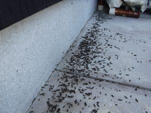 コウモリの糞はこんなところに