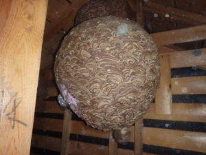 蜂の巣の中にネズミの巣。