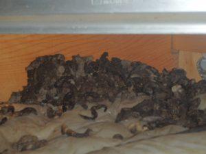室内の悪臭や天井のシミは小動物が原因。