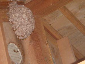 スズメバチの駆除は暑さとの戦い。