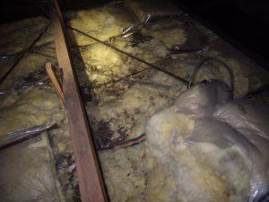 天井裏に糞の山 ㏌福山
