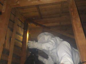 天井裏でのハチ駆除