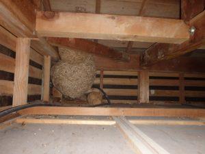 スズメバチの巣を見つけたらすぐ対処するべき