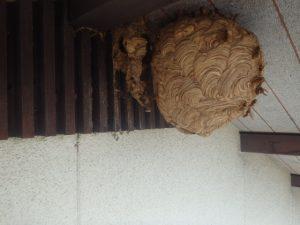 スズメバチの駆除作業