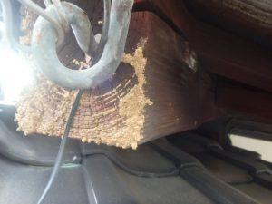 シロアリによる家屋の被害